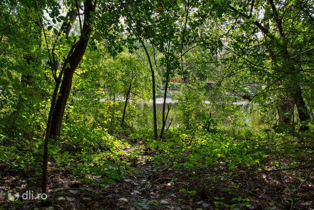 vedre-spre-lacul-din-padurea-noroieni-judetul-satu-mare.jpg