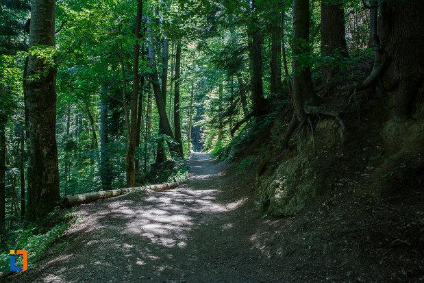 vegetatie-de-padure-traseul-spre-cascada-urlatoarea-din-busteni-judetul-prahova.jpg