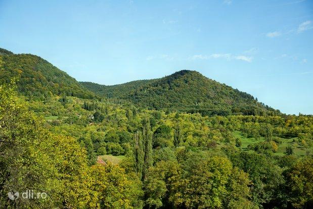 vegetatie-specifica-din-rezervatia-naturala-tinoavele-din-camarzana-judetul-satu-mare.jpg