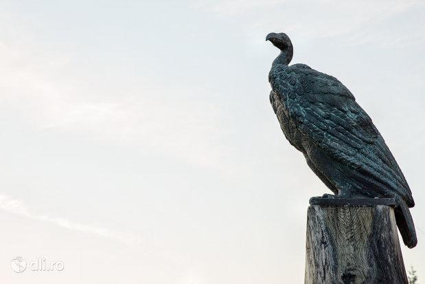 vultur-plesuv-biserica-reformata-din-zalau-judetul-salaj.jpg