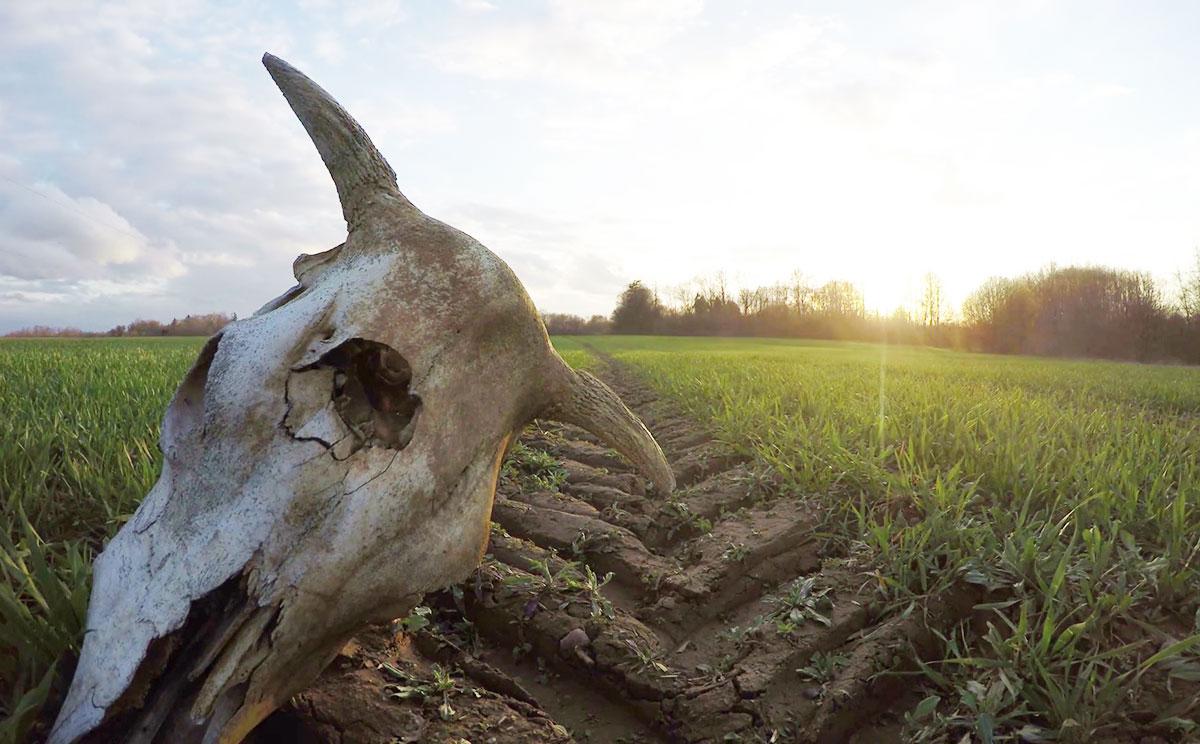 Mutilarea animalelor