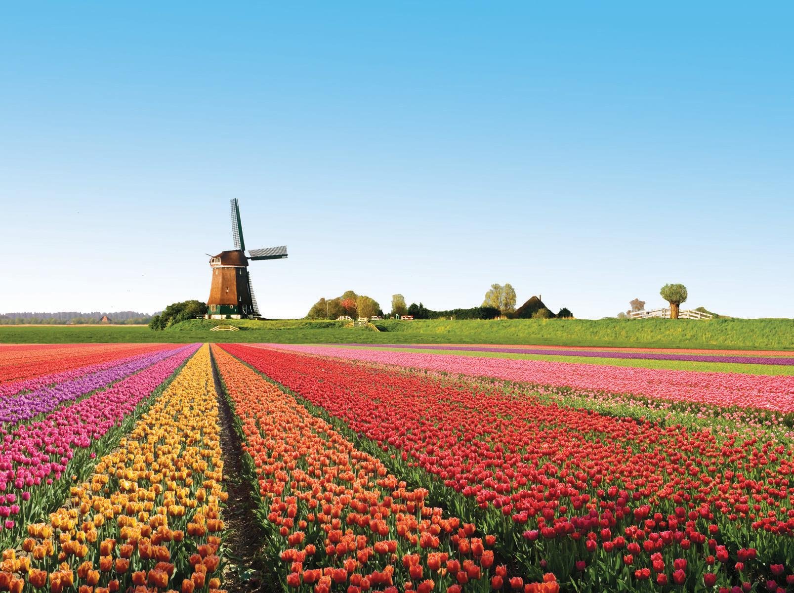 Olanda și mania lalelelor