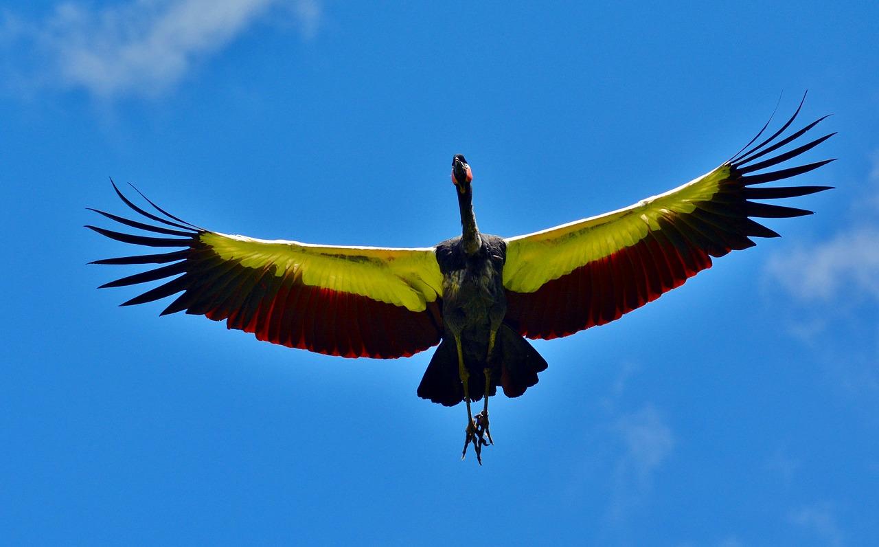 teoriile legate de pasarea condor