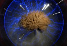 Creierul uman