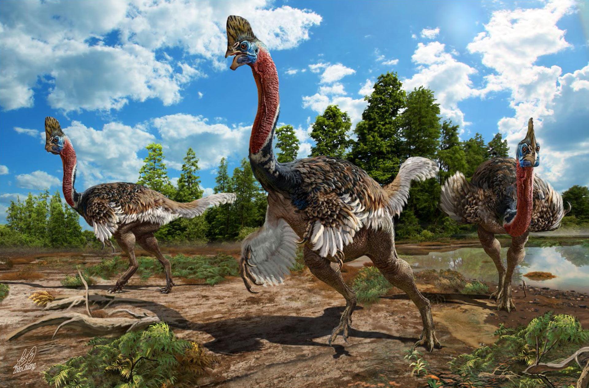 Dinozauri necunoscuti pana acum, Corythoraptor jacobsi