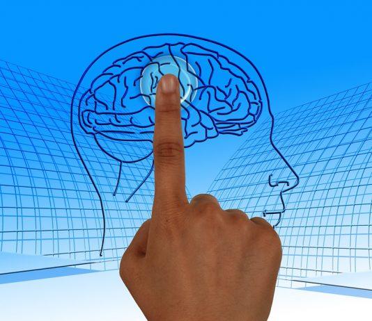Neuroplasticitatea creierului uman