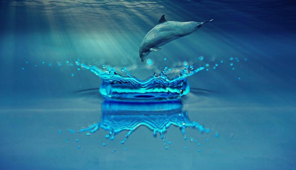 Memoria apei, purtam in noi o parte de mare