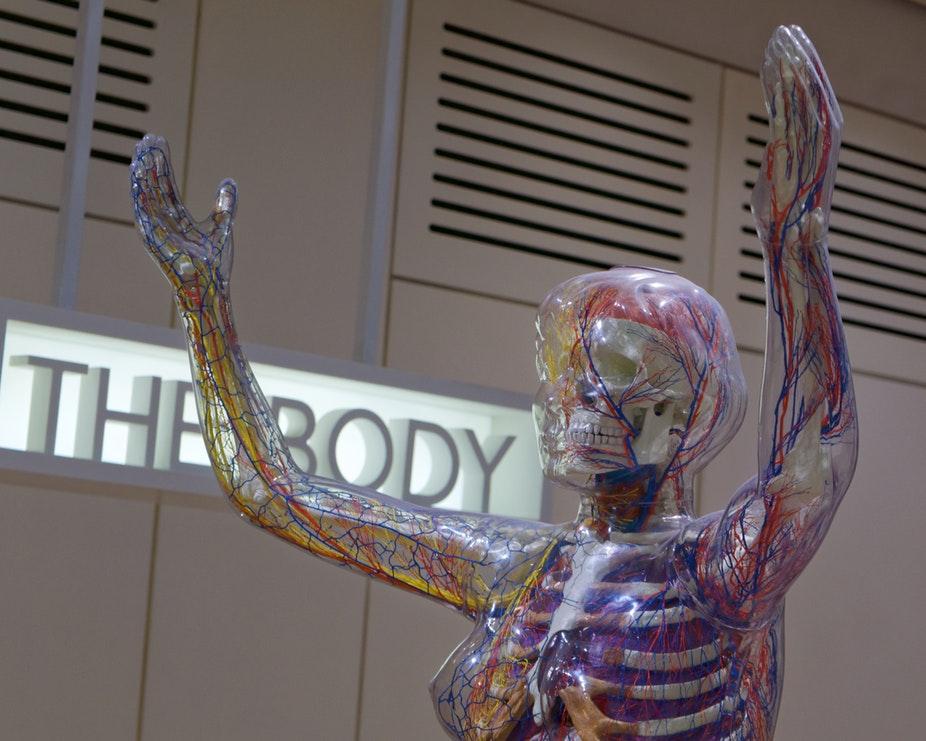 Anatomia corpului uman