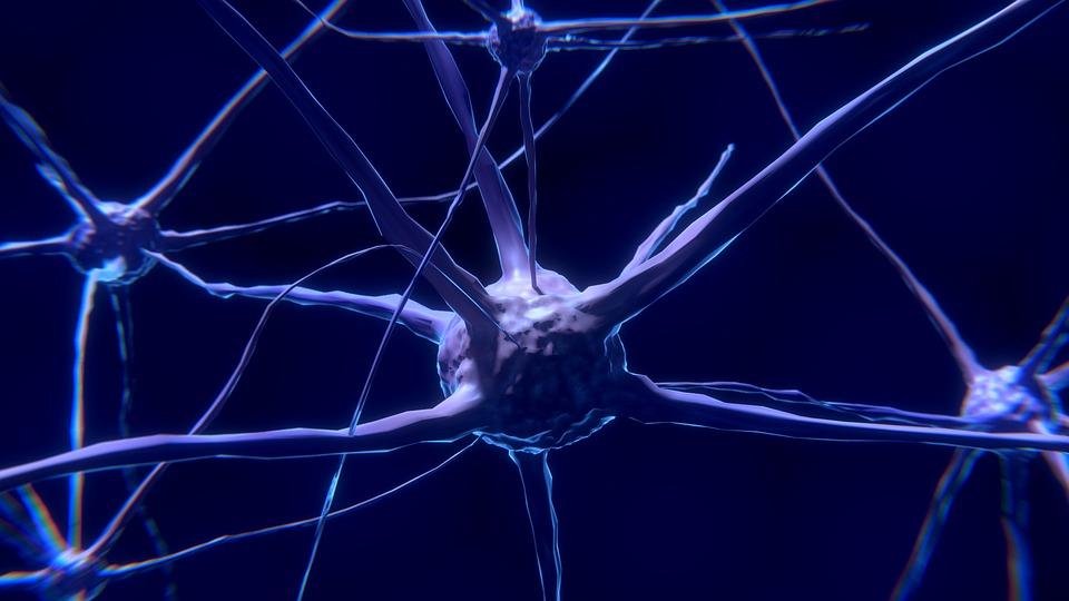 Celule nervoase sau neuroni