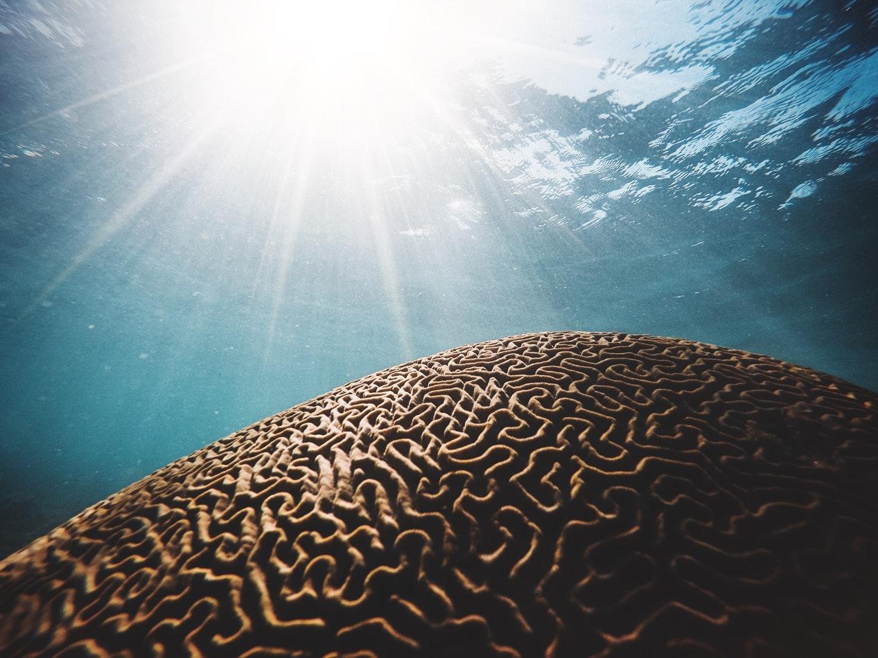 Mecanismele creierului uman