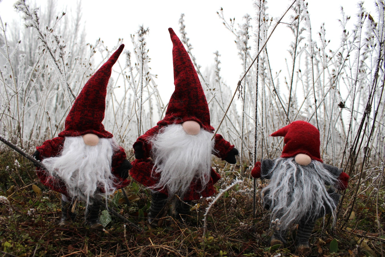 Crăciun cu cărţi în ţara elfilor
