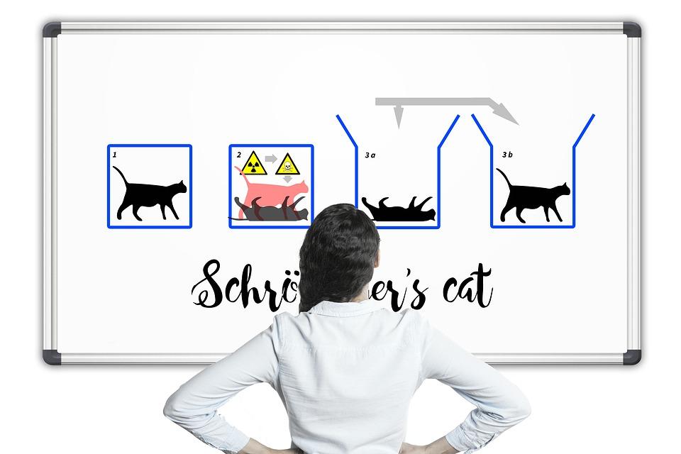 """Prima bacterie cuantică. Paradoxul """"Pisica lui Schrodinger"""" devine posibil"""