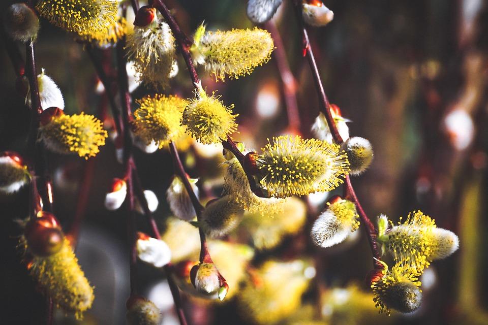 Floralia si Floriile