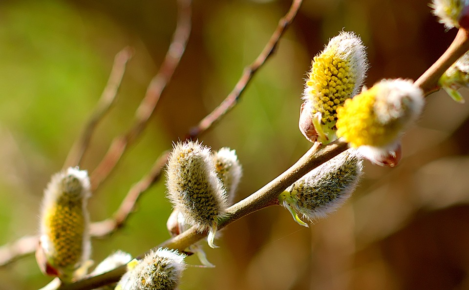 Floralia si sarbatoarea stalparilor