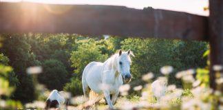 La Paştele cailor, Ispasul