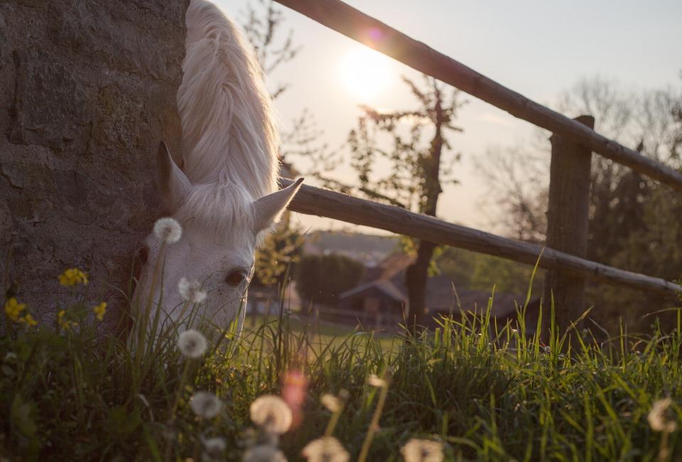 La Pastele cailor