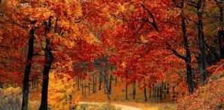 Luna octombrie, originea şi semnificaţia acestei denumiri