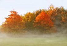 Luna noiembrie, originea şi semnificaţia acestei denumiri