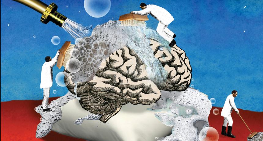 Creierul se spală în fiecare noapte, Sursa: Science News
