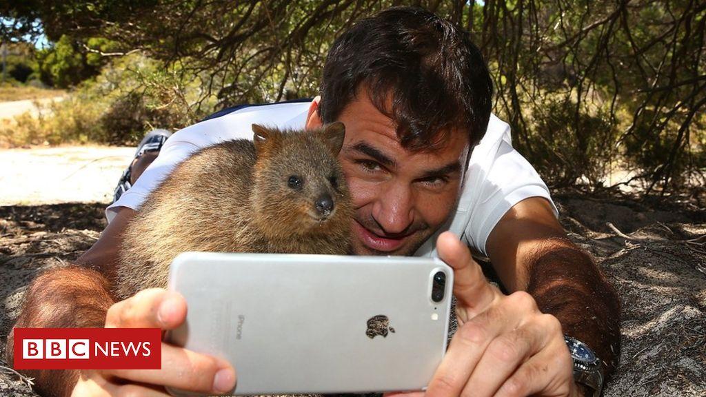 Federer, selfie cu un quokka