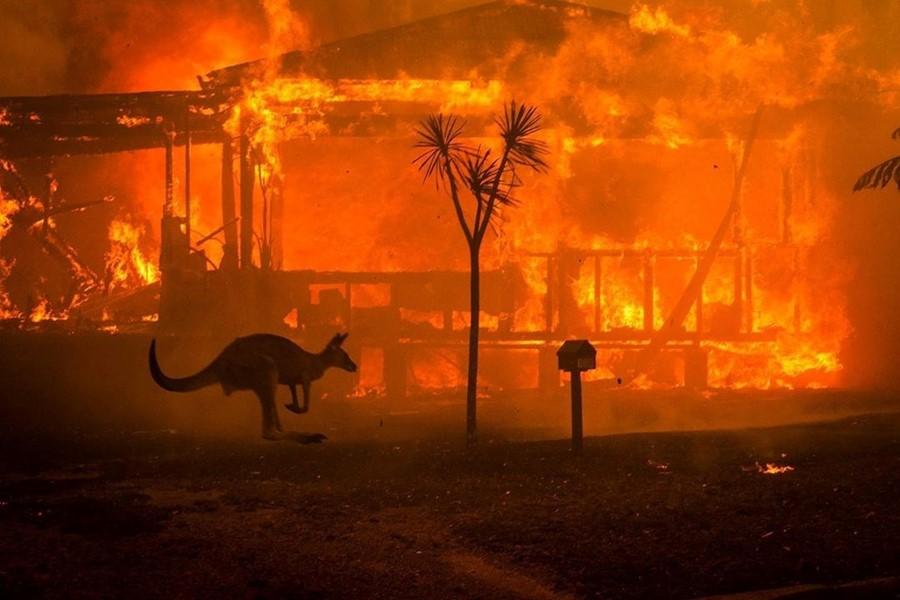 Incendii uriase, Sursa Dazed
