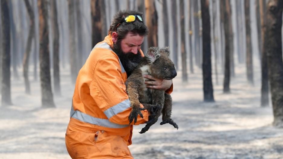 Incendiile din Australia si comportamentul uman, Sursa Public Radio Internatonal