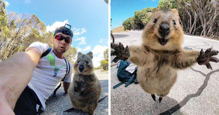 Selfie cu Quokka, Sursa Bored Panda
