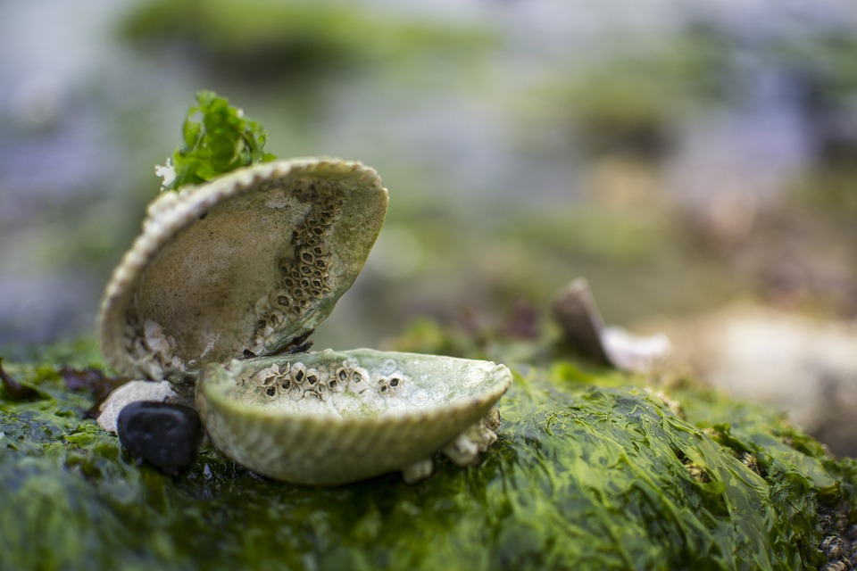 Alge marine si scoici