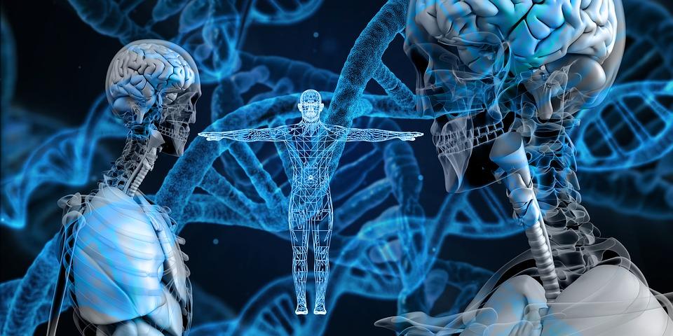 Genele educaţiei, mecanismele complexe ale organismului uman
