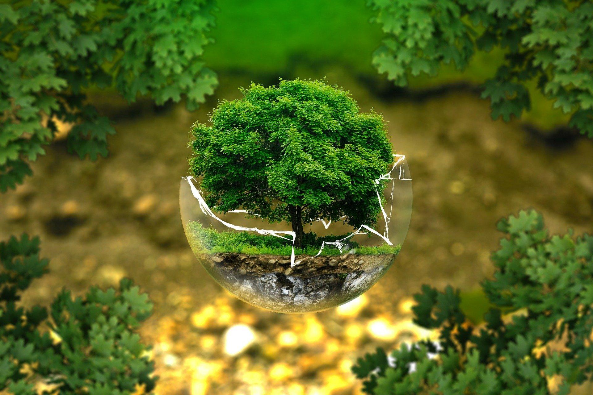 I[poteza Gaia si mediul inconjurator