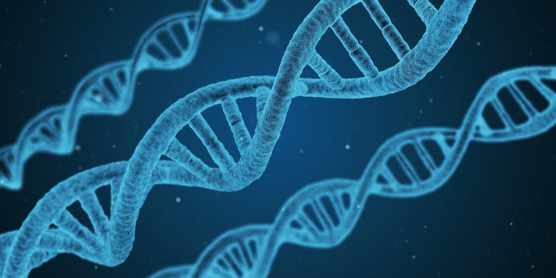 Zestrea genetica