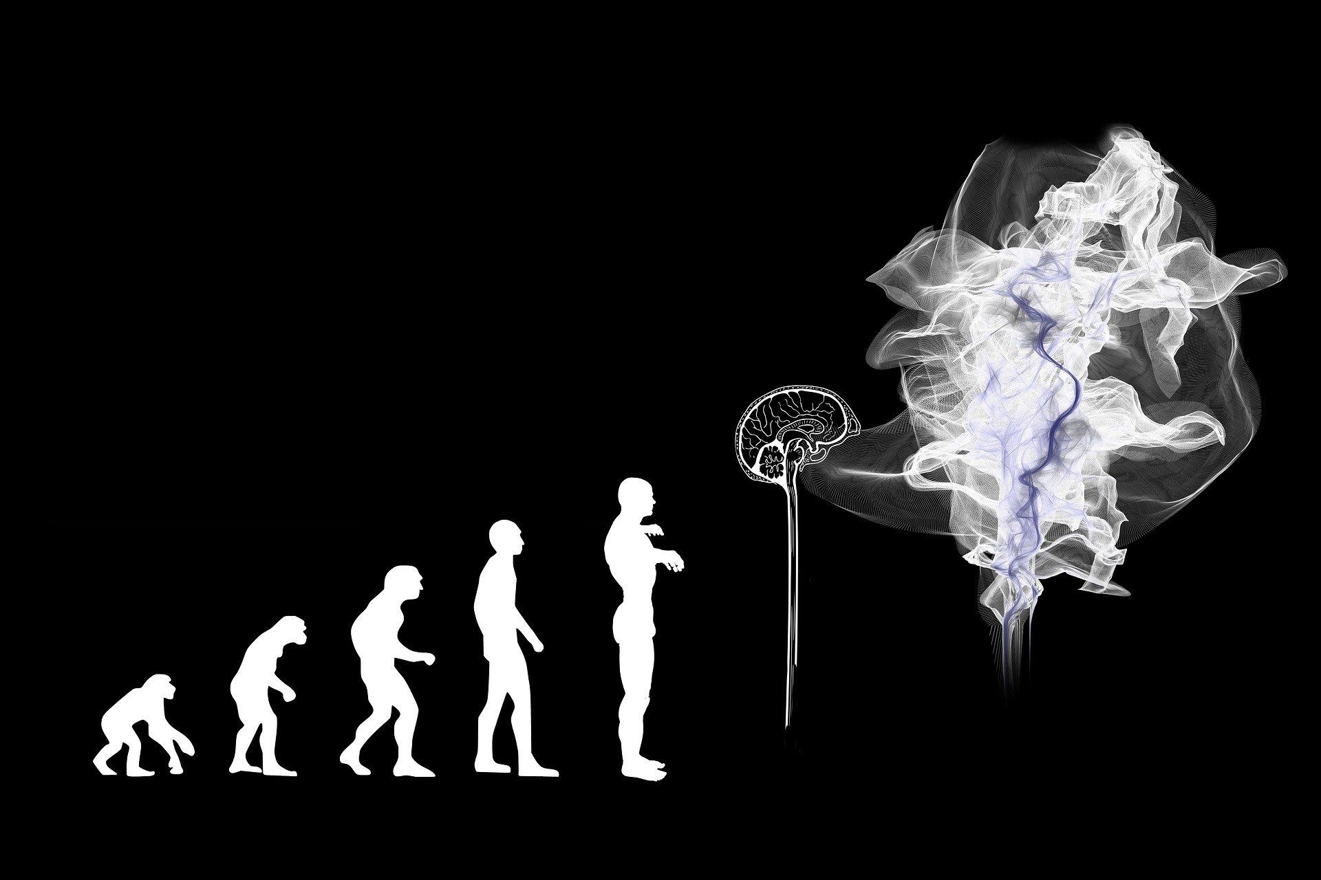 Inteligenta, evolutie