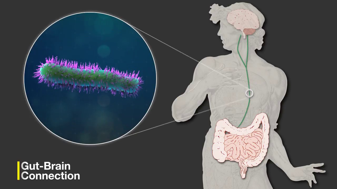 Legatura dintre creier si neuronii intestinali