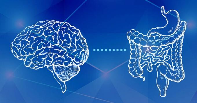 Axa Creier - neuroni intestinali