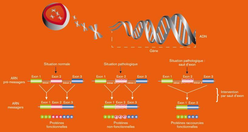 Terapia cu gene. Autovindecarea