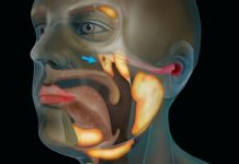 Un nou organ, complet necunoscut pana acum, Sursa Netherlands Cancer Institute