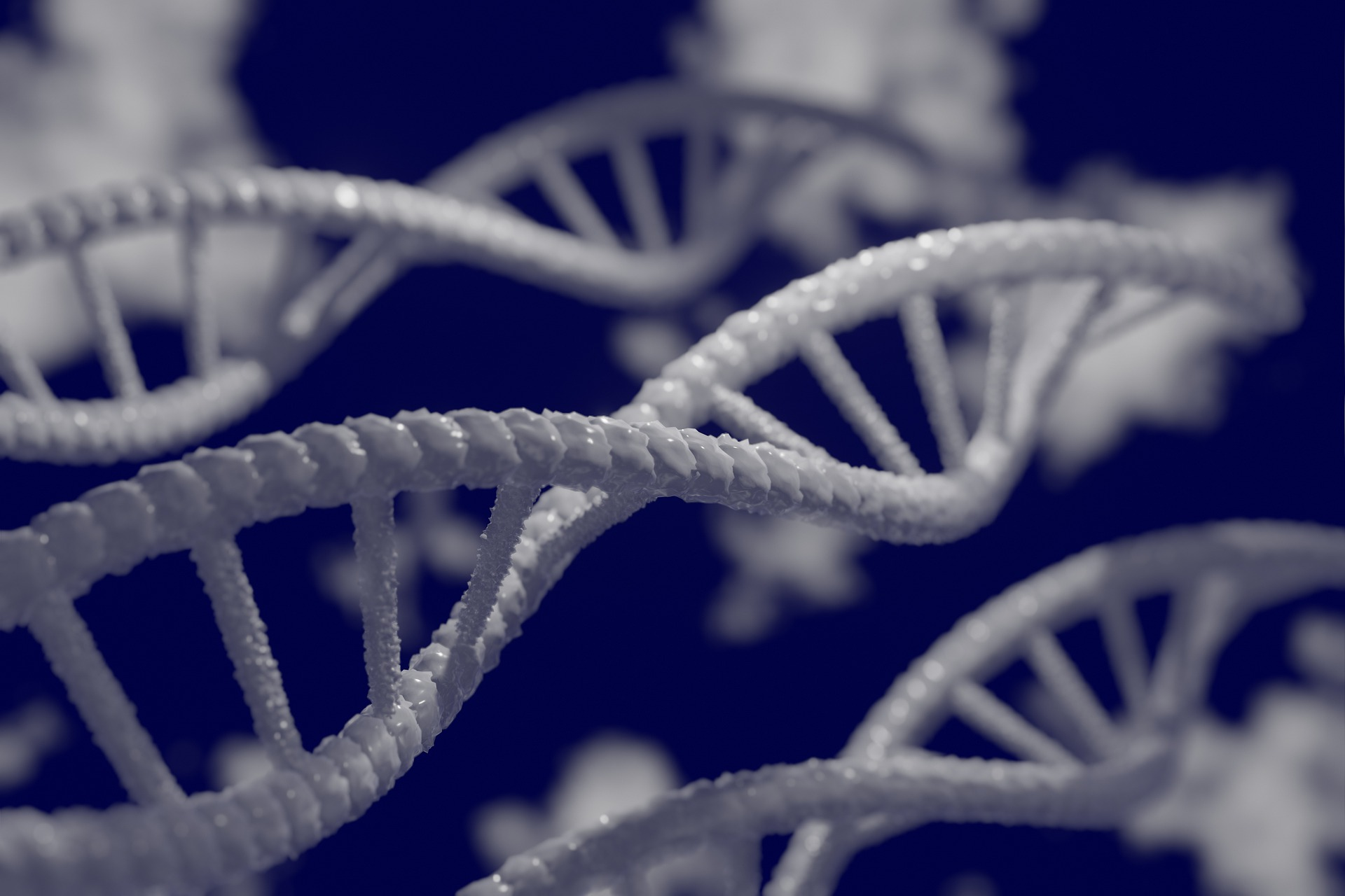 ADN, Dublu helix
