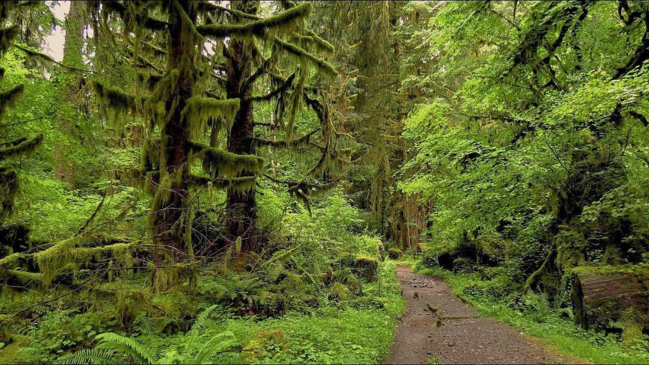 Cel mai tăcut loc din lume, Hoh Rainforest