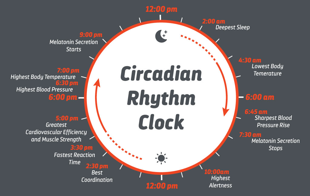 Ritmuri circadiene