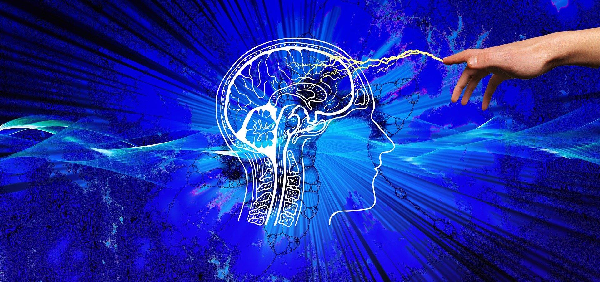 12 legi ale creierului