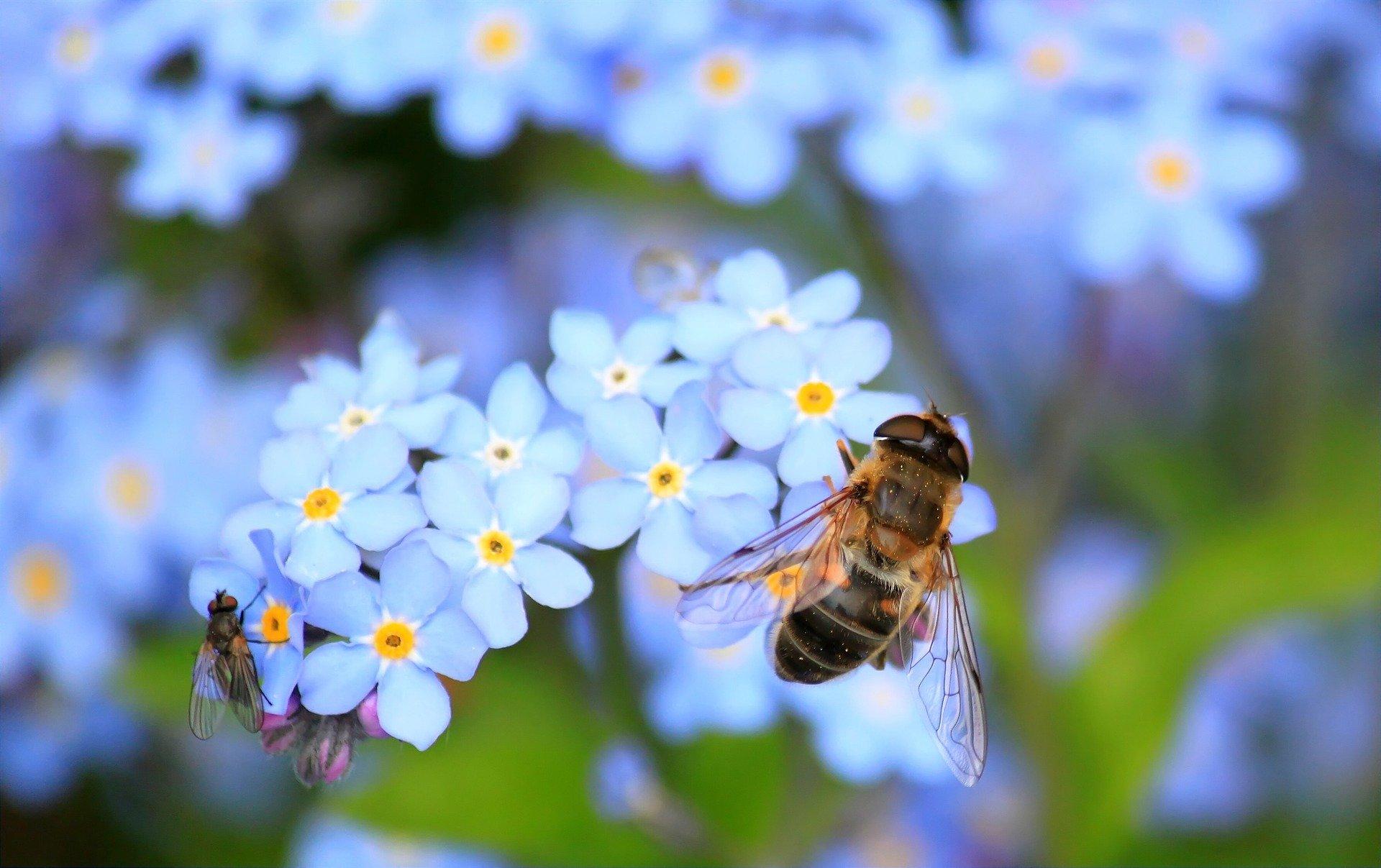 Albinele si echilibrul naturii
