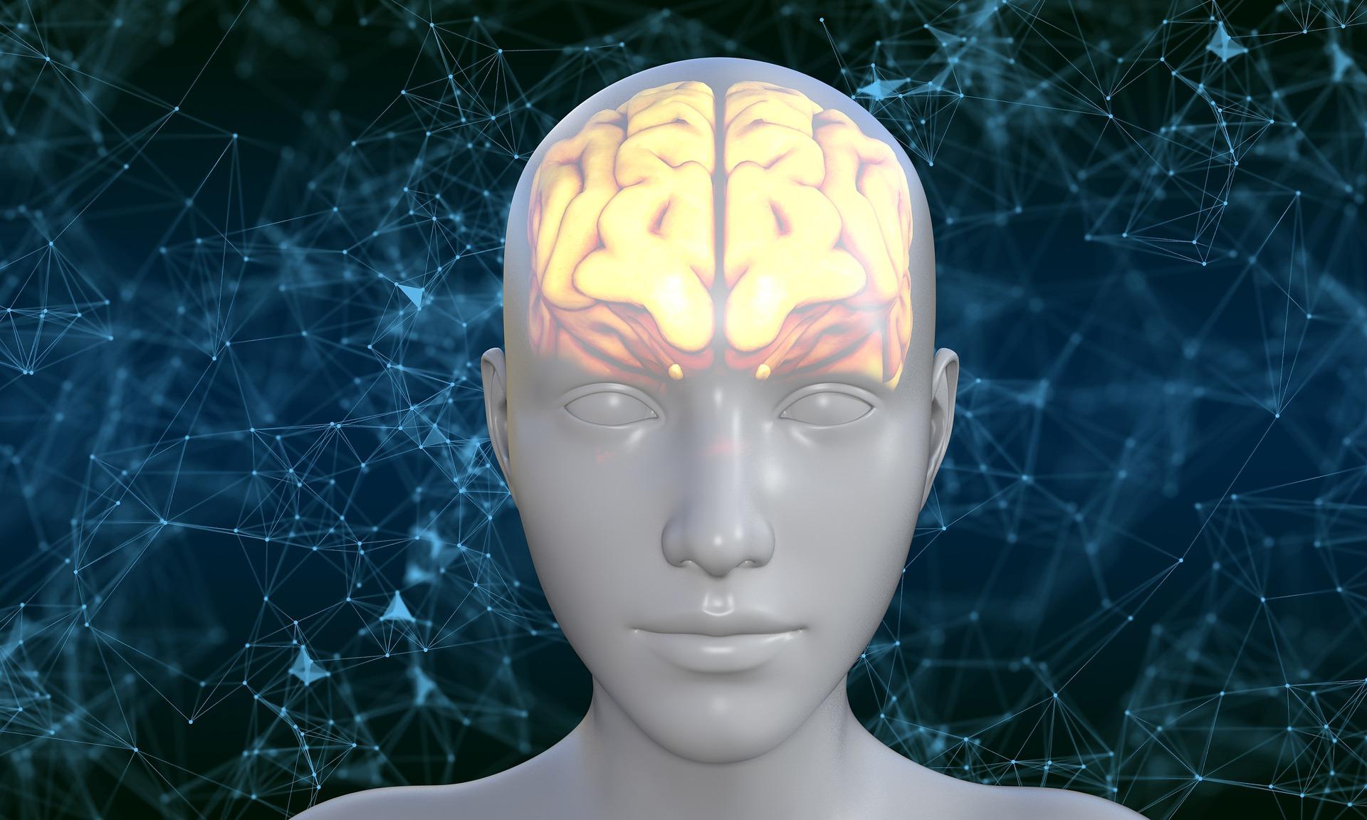 Creierul uman si capacitatea de adaptare