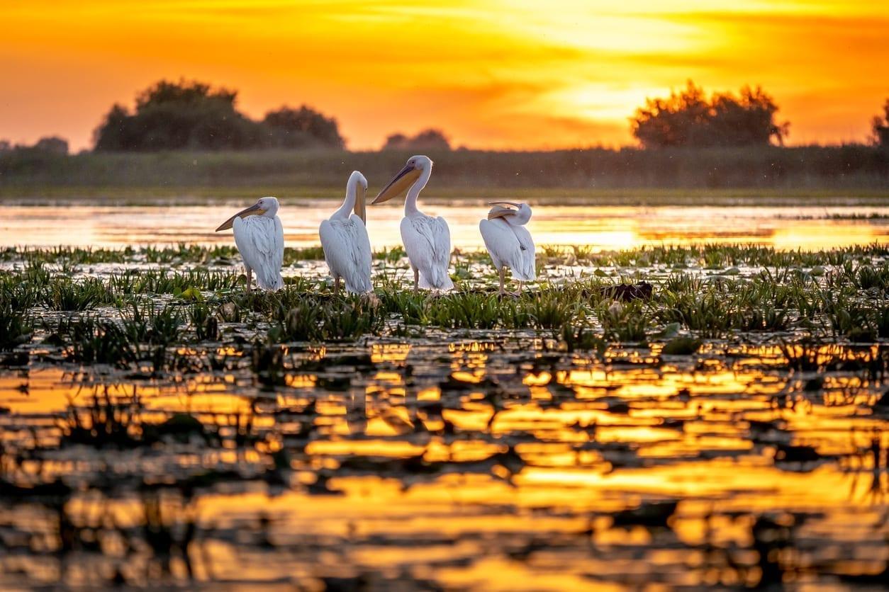 Fapte inedite despre România, Delta Dunarii