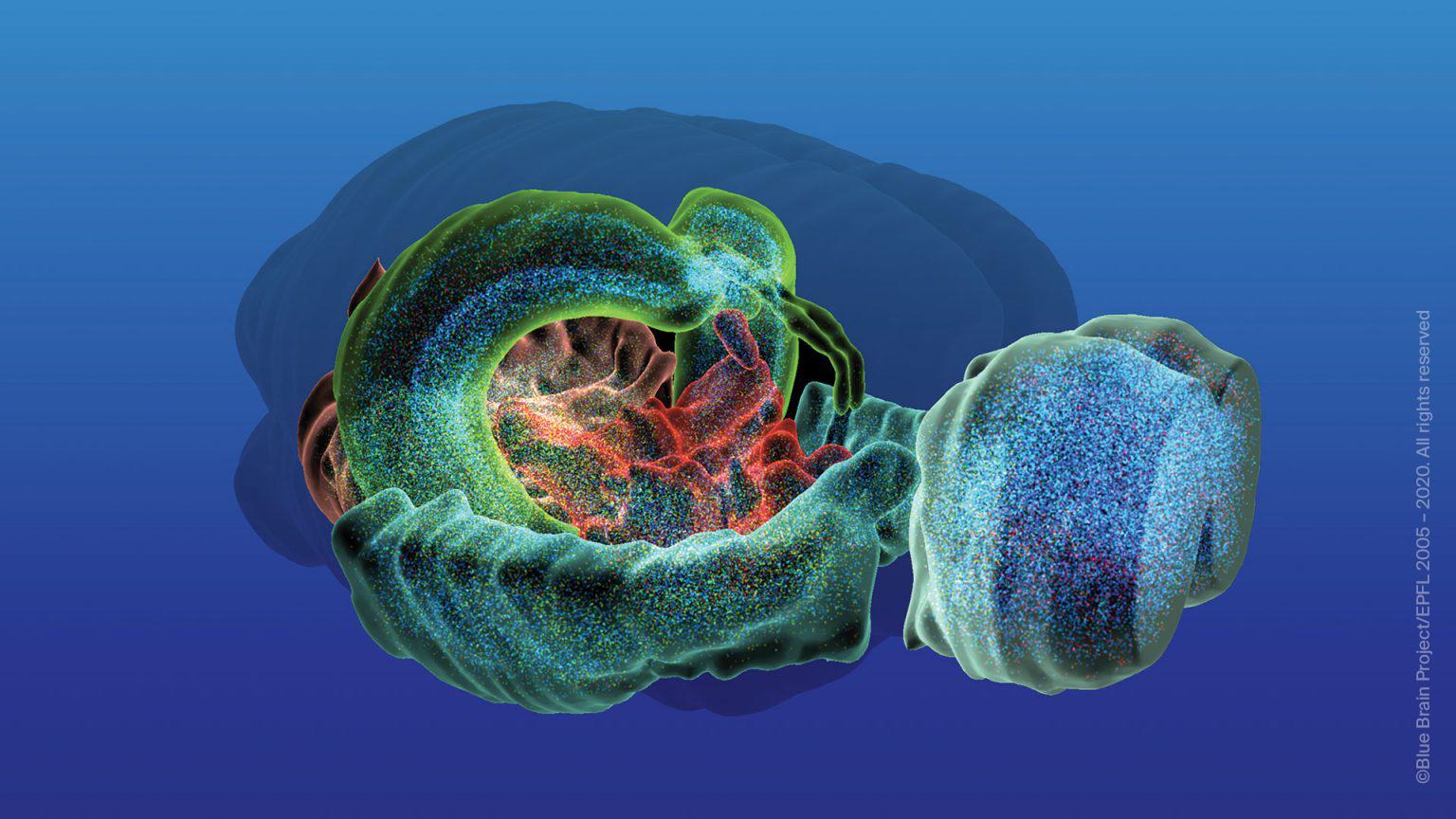 Blue Brain Project, Sursa EPFL